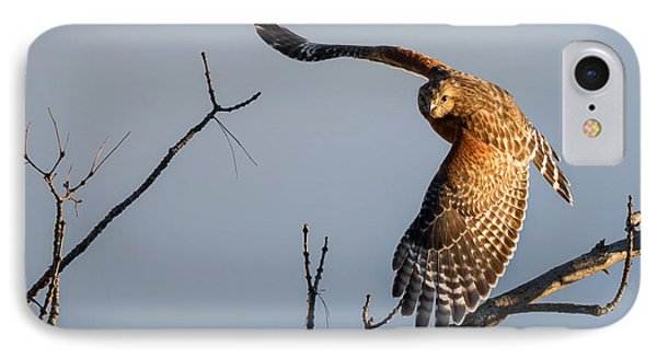 Red Shoulered Hawk In Flight IPhone Case by Bill Wakeley