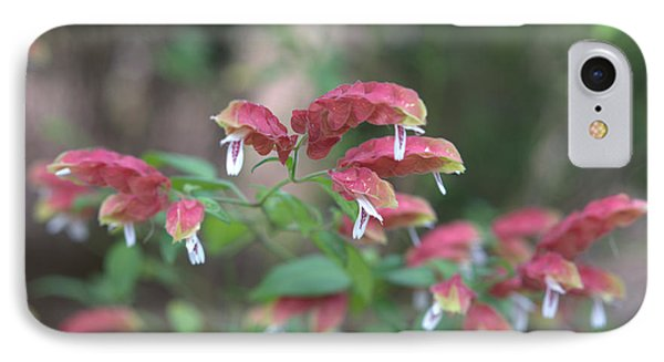 Red Shrimp Plant IPhone Case by Liane Wright