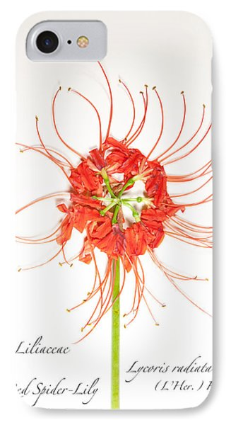 Red Spider-lily IPhone Case