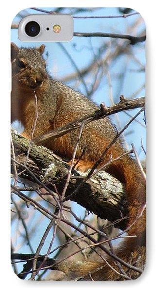 Red Squirrel  IPhone Case