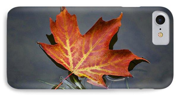 Red Sugar Maple Leaf Phone Case by Christina Rollo