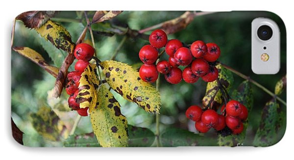 Red Summer Berries - Whistler IPhone Case by Amanda Holmes Tzafrir