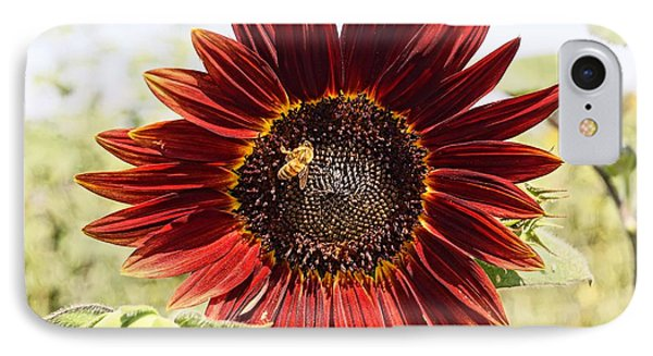 Red Sunflower And Bee IPhone Case by Kerri Mortenson