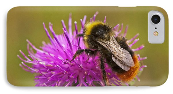 IPhone Case featuring the photograph Red Tail Bumble Bee by Paul Scoullar