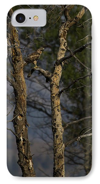 Red-tail Hawk   #0596 Phone Case by J L Woody Wooden