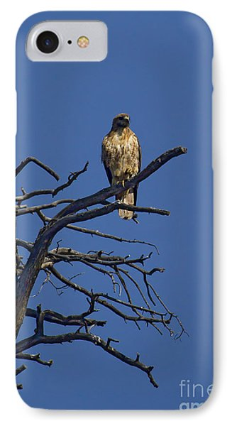 Red-tail Hawk   #0622 Phone Case by J L Woody Wooden
