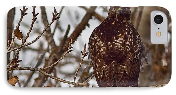 Red Tail Hawk IPhone Case by Brian Williamson