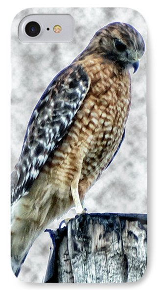 Red Tail Hawk Looking Down IPhone Case by Gena Weiser