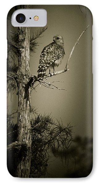 Red Tail Hawk On Loop Road IPhone Case by Bradley R Youngberg