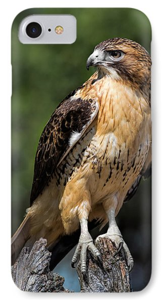 Red Tail Hawk Portrait IPhone Case by Dale Kincaid