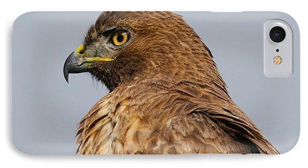 Red Tail Hawk Portrait Phone Case by Paul Marto