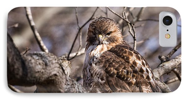 Red-tail Hawk Stare IPhone Case