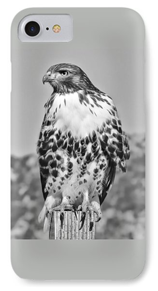 Red Tail Hawk Youth Black And White Phone Case by Jennie Marie Schell
