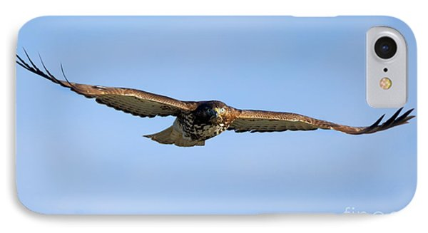 Red -tail Stare IPhone Case by Mike Dawson