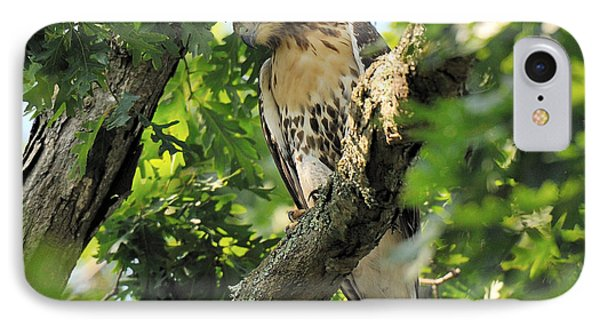 Red Tailed Hawk Phone Case by Angel Cher