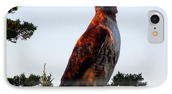 Red-tailed Hawk  IPhone Case by CapeScapes Fine Art Photography
