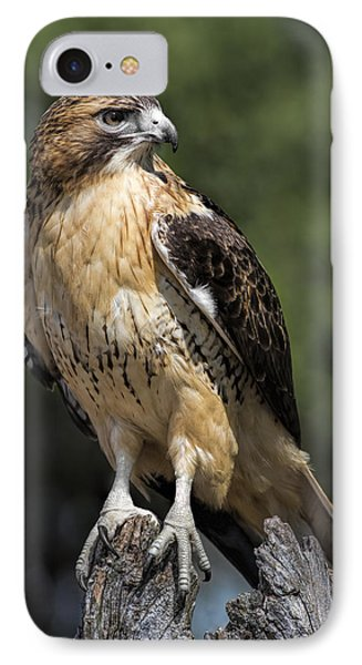 Red Tailed Hawk IPhone 7 Case