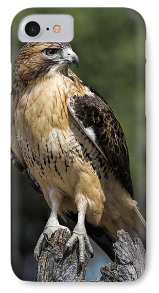 Red Tailed Hawk IPhone Case by Dale Kincaid