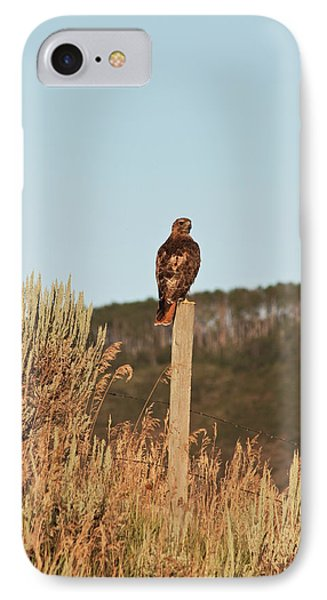 IPhone Case featuring the photograph Red Tailed Hawk by Daniel Hebard