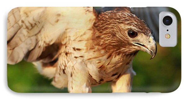 Red Tailed Hawk Hunting IPhone Case by Dan Sproul