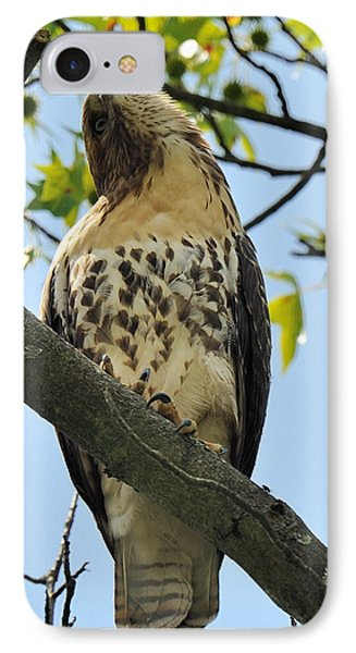 Red Tailed Hawk Juvy Phone Case by Angel Cher