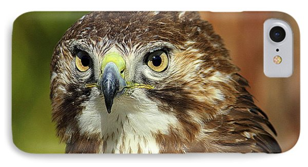Red Tailed Hawk IPhone Case
