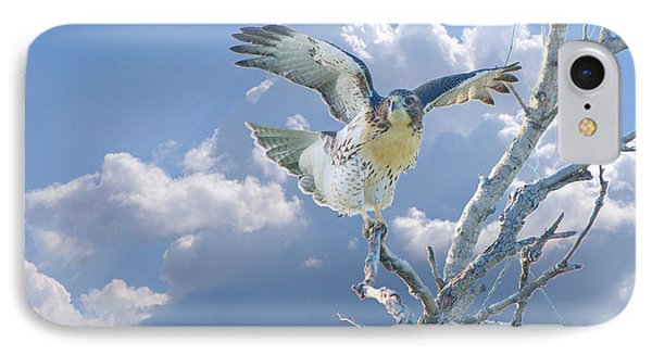Red-tailed Hawk Pirouette Pose Phone Case by Roy Williams
