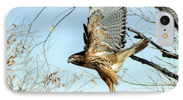 Red Tailed Hawk Sequence #2 IPhone Case by Stephen  Johnson