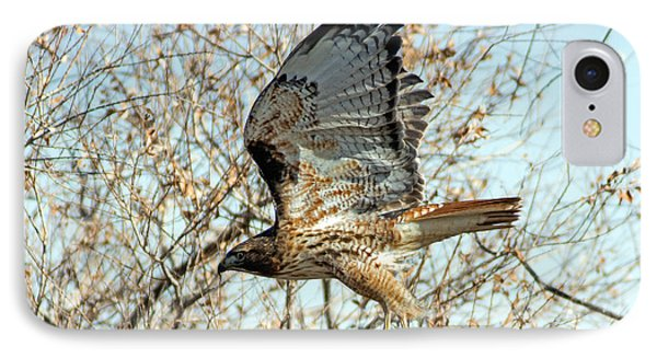 Red Tailed Hawk Sequence #3 IPhone Case by Stephen  Johnson