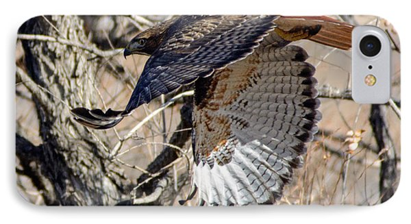Red Tailed Hawk Sequence #4 IPhone Case by Stephen  Johnson