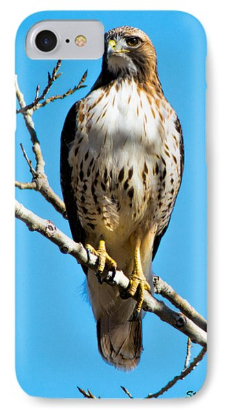 Red Tailed Hawk Standing Tall IPhone Case by Stephen  Johnson