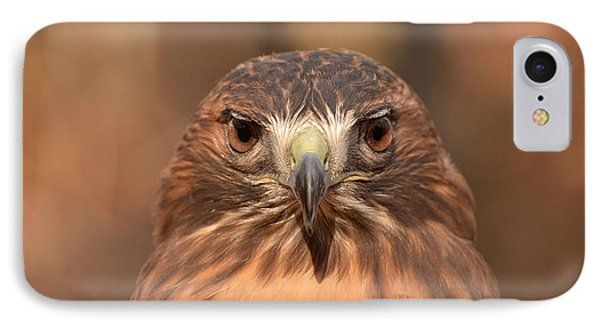 Red-tailed Hawk Stare IPhone Case