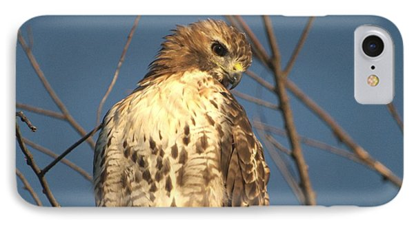 Red Tailed Hawk  IPhone Case by Susan  Dimitrakopoulos