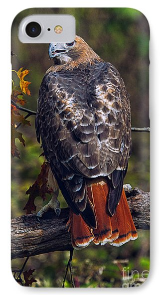 Red Tailed Hawk IPhone Case by Todd Bielby