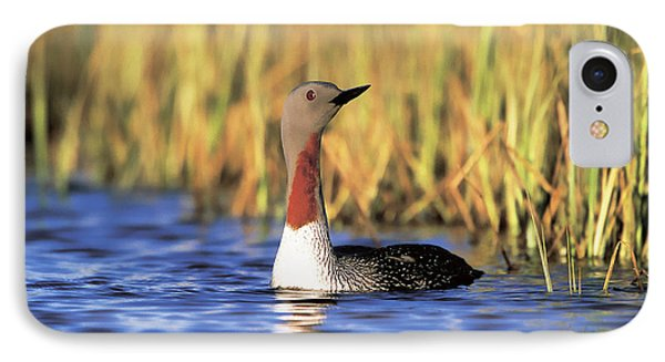 Red-throated Loon IPhone 7 Case
