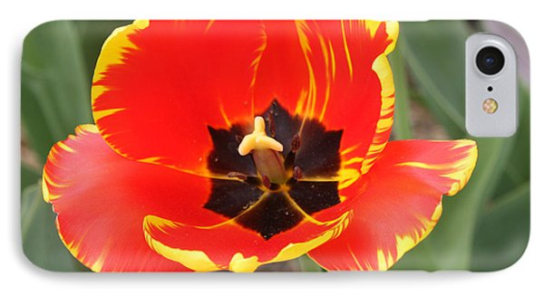 Red Tulip At Brooklyn Botanical Gardens Phone Case by John Telfer