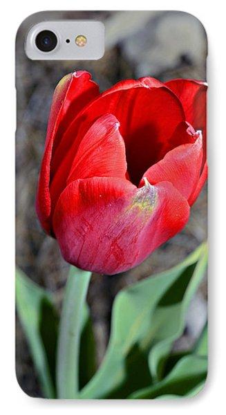 Red Tulip In Garden Phone Case by Susan Leggett