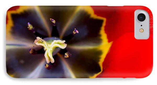 Red Tulip Macro IPhone Case by Adam Romanowicz