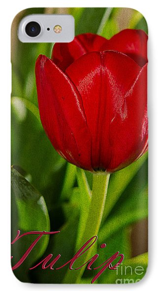 Red Tulip IPhone Case by MaryJane Armstrong