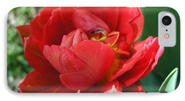 IPhone Case featuring the photograph Red Tulip by Vesna Martinjak