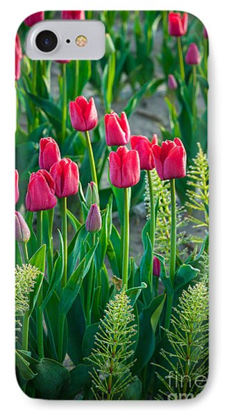 Red Tulips In Skagit Valley IPhone Case by Inge Johnsson