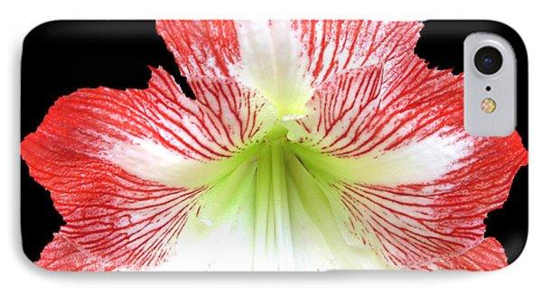 Red-white Amarylis-b IPhone Case