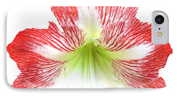 Red-white Amarylis-w IPhone Case