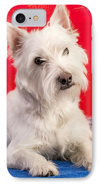 Red White And Blue Westie IPhone Case by Edward Fielding