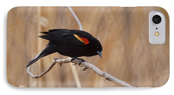 Red Winged Blackbird 1 IPhone Case by Ernie Echols