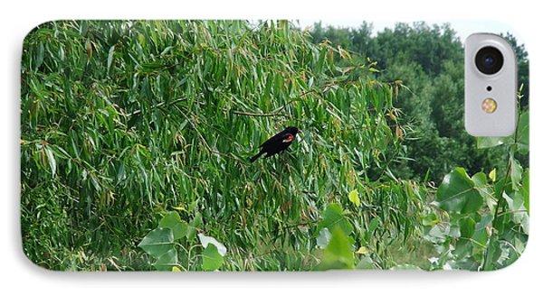 Red-winged Blackbird IPhone Case by Deborah DeLaBarre