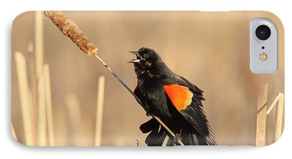 Red Winged Blackbird On Cattail Phone Case by Daniel Behm