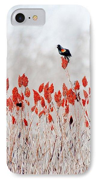 Red Winged Blackbird On Sumac IPhone Case by Steven Ralser