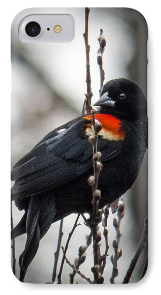 IPhone Case featuring the photograph Red Winged Blackbird In Pussy Willows by Patti Deters