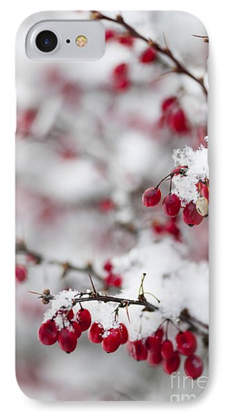 Red Winter Berries Under Snow IPhone Case by Elena Elisseeva